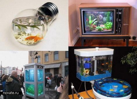 Необычные аквариумы фото